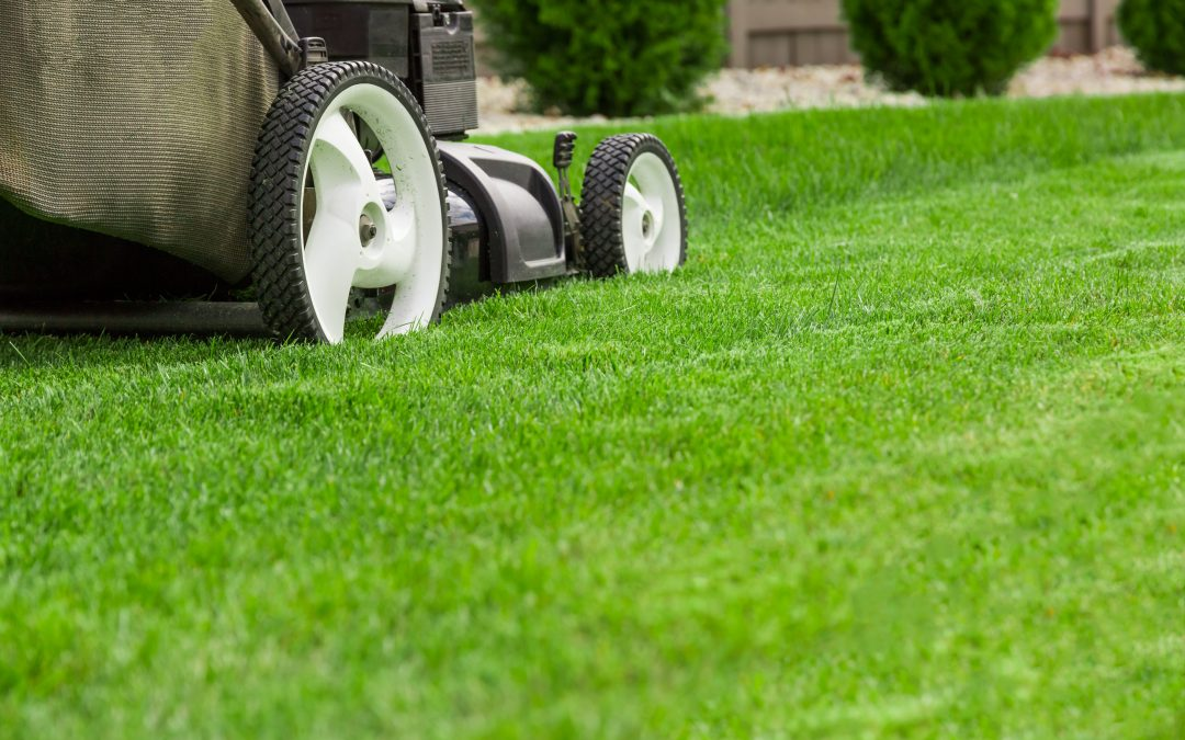 What is the proper mowing height for grass in your yard?